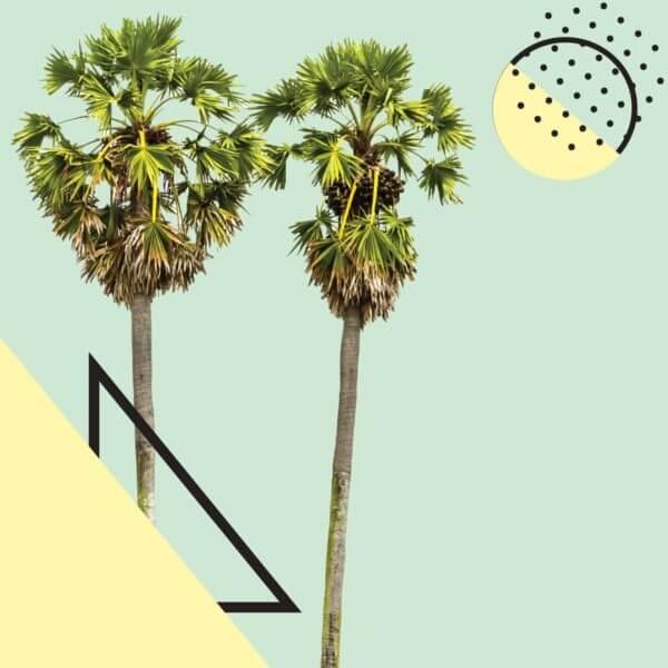 palm tree paradise